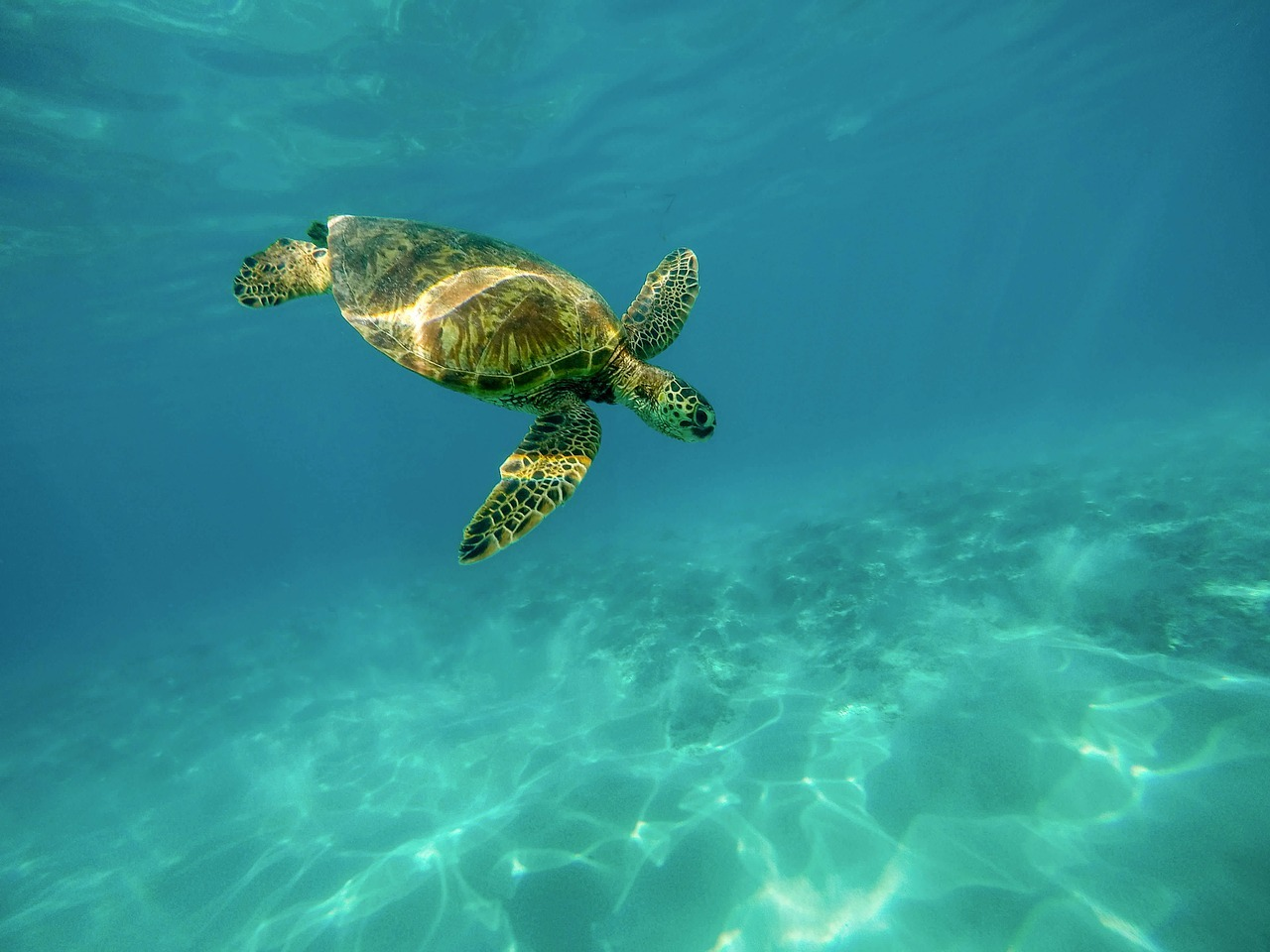 Zeeschildpad duiken
